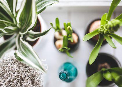house plant sale